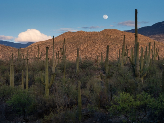 Moon over cactus forest